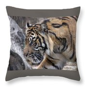 Sumatran Tiger-5418 Throw Pillow