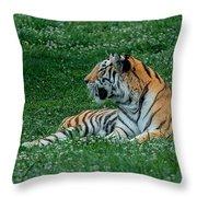 Tiger At Rest 1 Throw Pillow