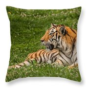 Tiger At Rest 3 Throw Pillow