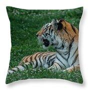 Tiger At Rest 4 Throw Pillow