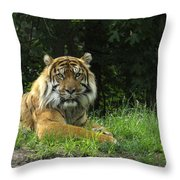 Tiger At Rest Throw Pillow