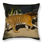 Tiger Beat Throw Pillow