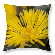 Tiger Claw Plant Throw Pillow