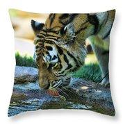 Tiger Drinking Water Throw Pillow