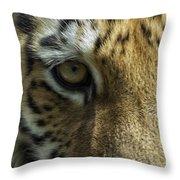 Tiger Eyes Throw Pillow