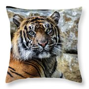 Tiger Facing The Crowd Throw Pillow