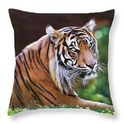 Tiger In The Sun Painting Throw Pillow