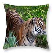 Tiger In The Vast Jungles Throw Pillow