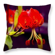 Tiger Lilly In Repose Throw Pillow