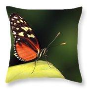 Tiger Longwing Throw Pillow