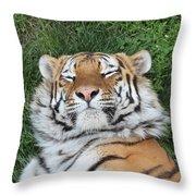 Tiger Nap Time Throw Pillow