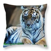 Tiger Posing Throw Pillow