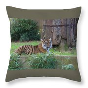 Tiger Resting Throw Pillow