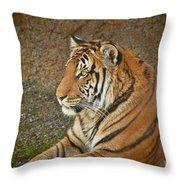 Tiger Stair Throw Pillow
