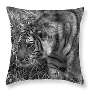 Tiger Stalking In Black And White Throw Pillow
