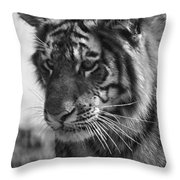 Tiger Stare In Black And White Throw Pillow