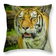 Tiger Stare Throw Pillow