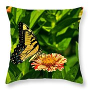 Tiger Swallowtail And Peppermint Stick Zinnias Throw Pillow