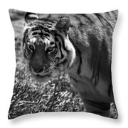Tiger With A Cold Stare Throw Pillow