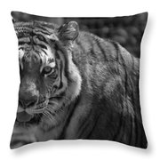 Tiger With A Fixed Stare Throw Pillow
