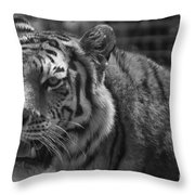 Tiger With A Hard Stare Throw Pillow