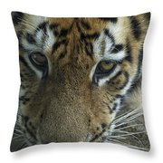 Tiger You Looking At Me Throw Pillow
