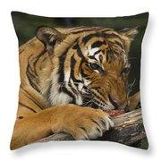 Tiger3 Throw Pillow