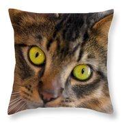 Tigger's Stare Throw Pillow