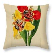 Tigridia Pavonia And Conchiflora Throw Pillow
