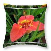 Tigridia Pavonia Throw Pillow