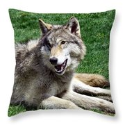 Timber Sunning Throw Pillow