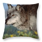 Timber Wolf Adult Portrait North America Throw Pillow