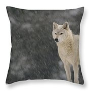 Timber Wolf Female North America Throw Pillow