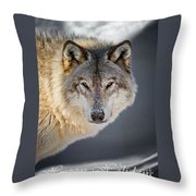 Timber Wolf Holiday Card 21 Throw Pillow