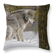 Timber Wolf In Snow Throw Pillow
