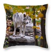 Timber Wolf On Rock Throw Pillow