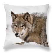 Timber Wolf Pictures 1028 Throw Pillow