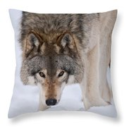 Timber Wolf Pictures 1042 Throw Pillow
