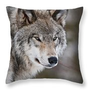 Timber Wolf Pictures 1067 Throw Pillow