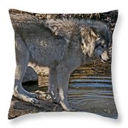 Timber Wolf Pictures 1101 Throw Pillow