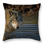 Timber Wolf Pictures 1103 Throw Pillow