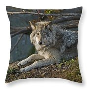 Timber Wolf Pictures 1148 Throw Pillow