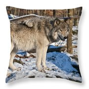 Timber Wolf Pictures 1175 Throw Pillow