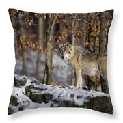 Timber Wolf Pictures 1206 Throw Pillow