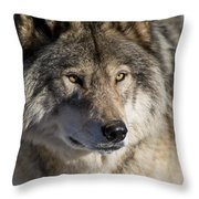 Timber Wolf Pictures 1218 Throw Pillow