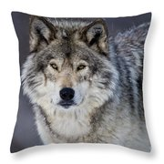 Timber Wolf Pictures 1271 Throw Pillow