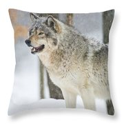 Timber Wolf Pictures 1302 Throw Pillow