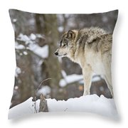 Timber Wolf Pictures 1306 Throw Pillow