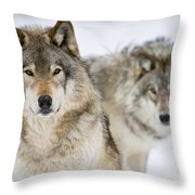 Timber Wolf Pictures 1312 Throw Pillow