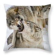 Timber Wolf Pictures 1314 Throw Pillow